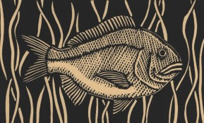 fish col sm